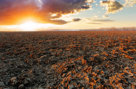 ploughed field: Plowed field at sunset