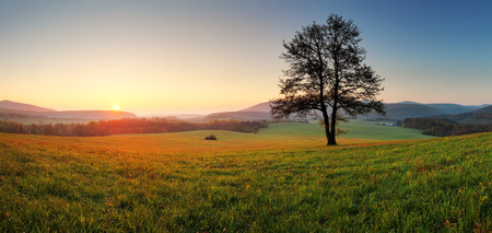 nice weather: Spring landscape with tree and sun Stock Photo