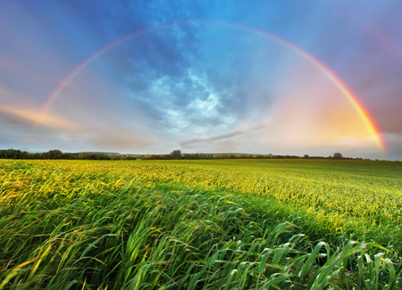 Rainbow over spring field  Stock Photo