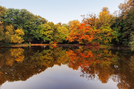 Autumn lake and forest photo