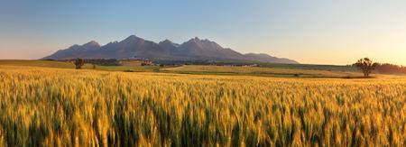 Wheat field with path under Tatras