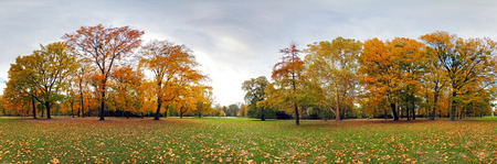 360 degree forest fall panorama