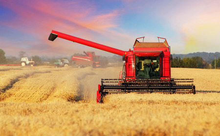 Wheat field with harvester 스톡 콘텐츠