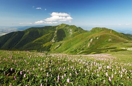 mala fatra: Green Mountain with wild flowers meadow - Mala Fatra Stock Photo