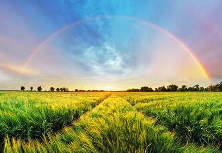 Rainbow Rural landscape with wheat field on sunset Stock Photo