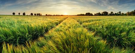 일몰에 밀 필드와 농촌 풍경 스톡 콘텐츠