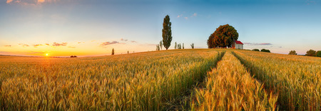 krajina: Letní pšeničné pole panorama venkov, zemědělství