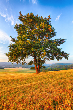 huge tree: Tree on meadow