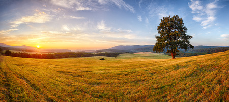 pasture: Tree on nature panorama landcape