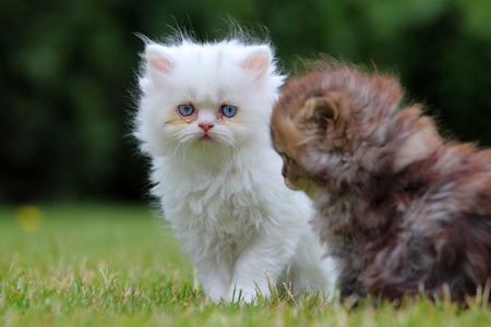 Gato joven, verde al aire libre