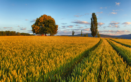 grains: wheat field with chapel in Slovakia Stock Photo