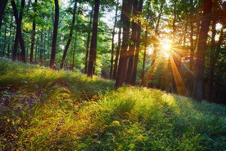 De felle zonnestralen schijnt door takken van bomen, hout landschap