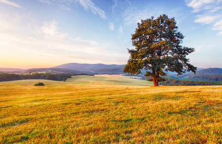 Spring landscape with tree and sun Stock Photo