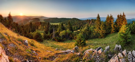 Spruce forest green mountain landscape panorama sunset, Slovakia.