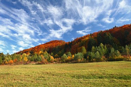 dia soleado: paisaje de otoño con árboles y césped en el primer plano. El bosque de otoño. Foto de archivo