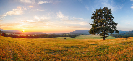 farm: Alone tree on meadow at sunset with sun - panorama Stock Photo