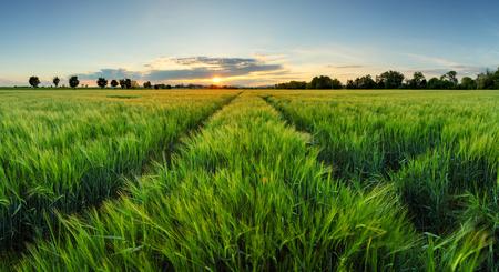 Západ slunce nad pšeničné pole s cestou Reklamní fotografie