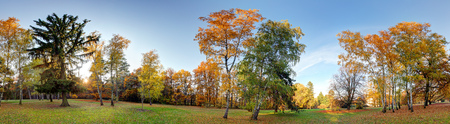 autumnal: Forest autumn panorama in park Stock Photo