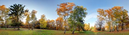Panorama del bosque del otoño en el parque Foto de archivo
