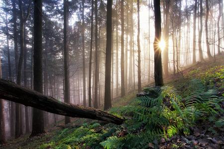helechos: bosque virgen con helechos, selva Foto de archivo