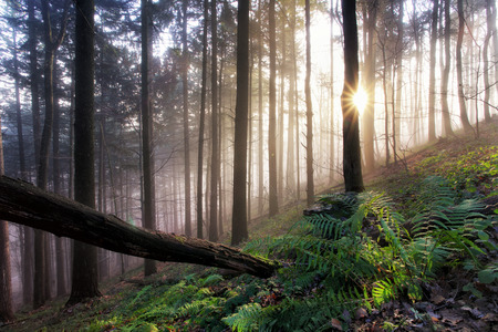 primeval forest: Primeval forest with ferns, Jungle Stock Photo