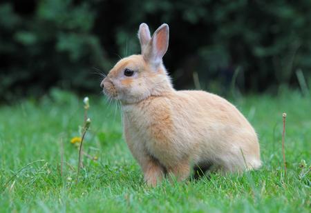 conejo: Conejo, Pascua