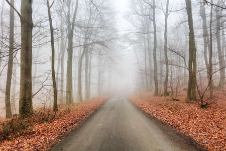 misty forest: Road in misty forest at fall
