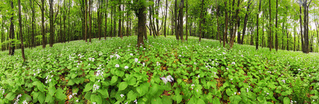Flowers on green forest - 360 panorama