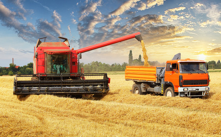 Overloading the grain from the combine into a car in the field Stock fotó