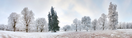 Panorama of winter forest with trees covered snow Stock Photo