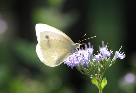 butterfly sitting on a grey twig Stock Photo