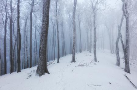 ツリーでフォレストの霧 frot 冬