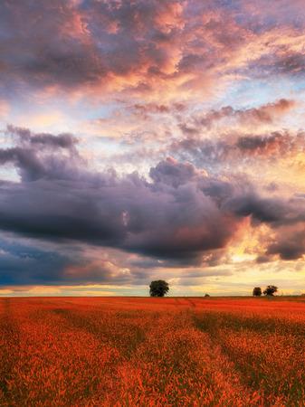 Sunset meadow Reklamní fotografie