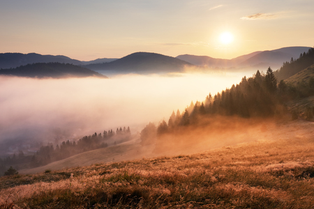Landcape with sun, meadow, forest and mountain.