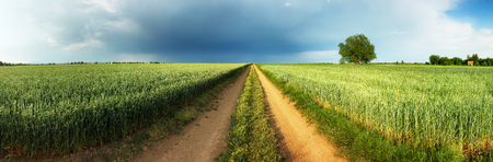 Road between green wheat field with storm and tree, Panorama
