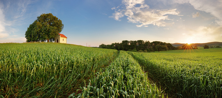 Spring panorama countryside landscape with wheat field Stock fotó