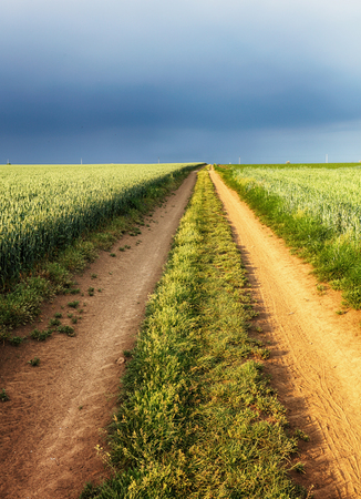 Path of a wheat field landscape to storm