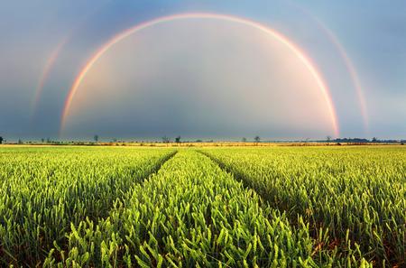 Rainbow Rural landscape with wheat field on sunset Reklamní fotografie