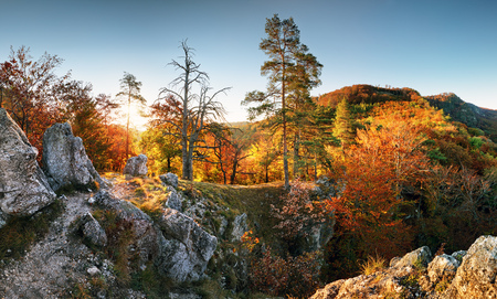 Landcape with autumn forest mountain with sun Reklamní fotografie