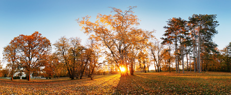Beautiful park garden in atumn. Fall panorama in park at sunrise in Slovakia Reklamní fotografie