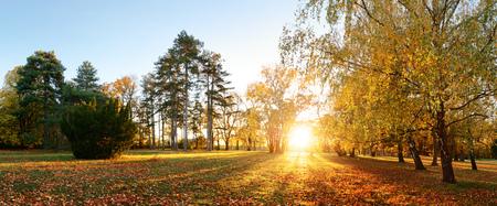 Panorama del árbol de otoño en el parque forestal al atardecer
