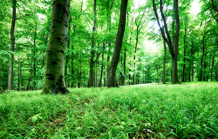 Green forest and grass with tree at rain