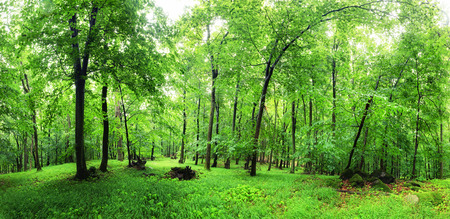 Green forest and grass with trees