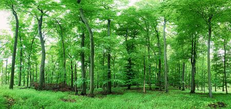 Forest landscape with green grass and woods at spring 写真素材