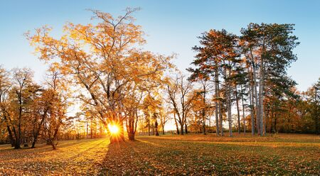 Autumn park with sun and forest Stok Fotoğraf