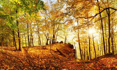 landcape with forest at autumn with sun