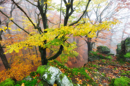 Autumn nature landscape.Misty autumn forest. Beautiful colorful trees in woodland. Scenic wild nature