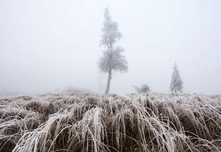Forest in winter with fog and snow landscape Reklamní fotografie