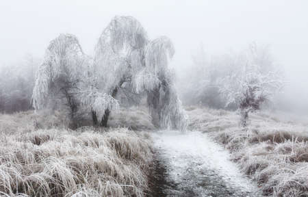 Forest in winter with fog and snow landscape Reklamní fotografie - 162197279