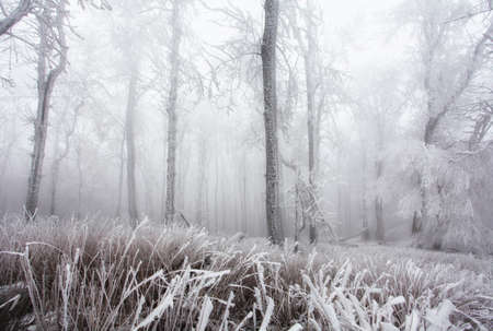 Forest in Winter with frozen trees Reklamní fotografie